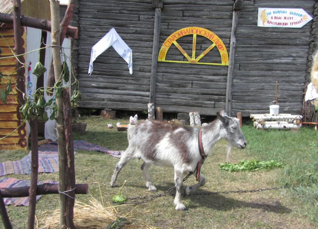 Коза_