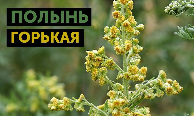 gorkaya-polyin_